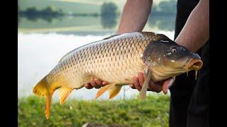 Классная рыбалка.Рыбалка на сазана карпа в пруду.Рыбалка с ночевкой....