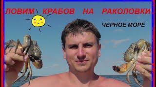 ЛОВЛЯ КРАБОВ РАКОЛОВКАМИ. Черное море.  Крым.  пос.  Штормовое