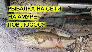 Рыбалка на сети на Амуре. Лов кеты. Осенняя рыбалка на реке
