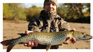 Жор щуки в Листопад. Рыбалка на Спиннинг. Щука осенью на спиннинг.