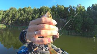 Рыбалка на микроджиг.Ловля окуня