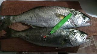 Экстремальная рыбалка 2020 Луфарь сарган Extreme fishing Bluefish Garfish