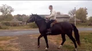 заготовка сена окончена//верхом на лошади второй раз в жизни