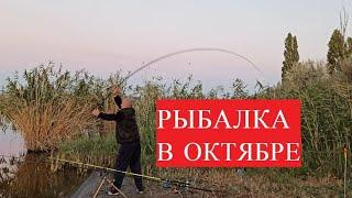 Рыбная ловля на донки в октябре 2020/Цены на платных водоемах Украина/ТАКАЯ РЫБАЛКА НАМ НЕ НУЖНА!