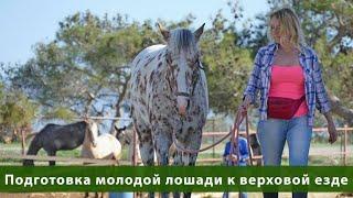 Подготовка молодой лошади к верховой езде