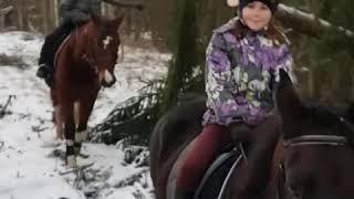 Прогулка верхом на лошадях в лес. Заряжаемся энергией природы!  Зимний лес , лошади и мы)) #конники