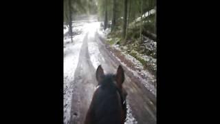 В Карельском лесу верхом на лошади.