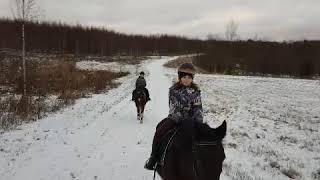 Прогулка верхом на лошадях в лес!  #лошади #верхом #наконе #конныйклубфартовый #бологое #лес #январь