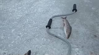 #рекасейда #Воркута #2июня2018 #рыбалка #хариус