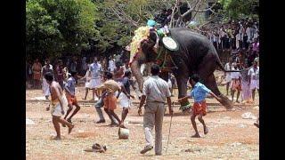 Animal attacks 2020. Best of #trampling, #elephant and #lionattacks