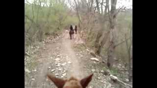На горной прогулке верхом на лошади