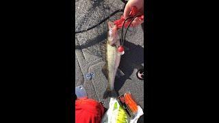 Ловим судака. Рыбинка. Рыбалка на Рыбинском водохранилище.