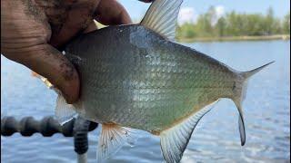 На реке со штекером (экстремальная рыбалка)