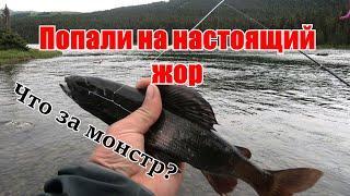 Вот это монстр! Таких чернышей я еще не ловил/Рыбалка на самом рыбном озере на АЛТАЕ/Уха из хариуса.