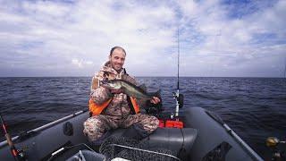 Рыбалка на рыбинском водохранилище. Судаки и огромные щуки на Рыбинке