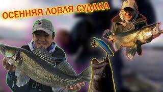 Осенняя ловля крупного судака и трофейной щуки, часть 1. Ратлины Чадина. Рыбалка в Финляндии
