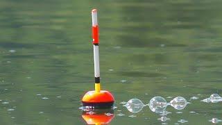 Рыбалка на толстолоба и ловля на фидер - пружину. My fishing