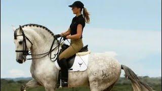||Клип про конный спорт||