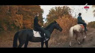 Лошади, красивая прогулка на лошадях.