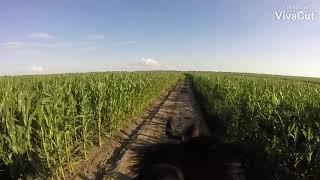 Прогулка на лошади(гоу про)бешеные скачки по полям,прогулка глазами всадника (верхом без седла)